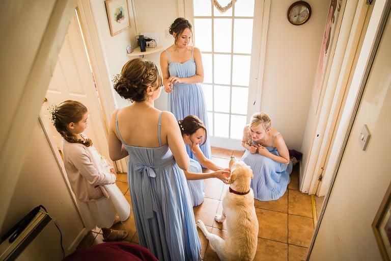 Wedding dog, bridesmaids